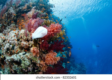 pollution: plastic bag in the reef