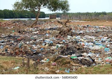 pollution of wetland dump litter