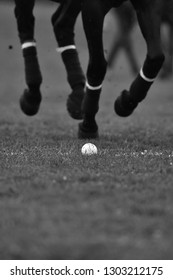 Polo horse legs in motion close up. Ball on the grass. Vertical, black and white.