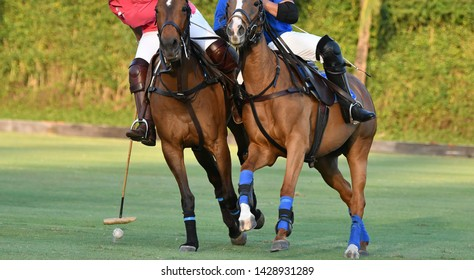 The polo horse player hit a polo ball in games.