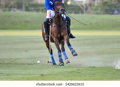 Polo Horse Player (Number 3) are Riding To Control The Ball.