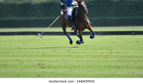 Polo Horse Player Riding To Control The Ball, Horse full speed in Polo match.