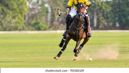 Polo Horse Player Riding To Control The Ball.