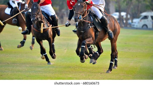 Polo horse player riding a horse to hit a ball in match.