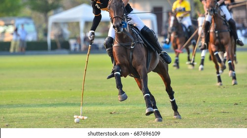 A polo horse sport player hit a polo ball with a mallet in match.