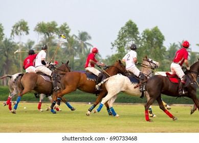 POLO HORSE SPORT PLAYER IN MATCH.