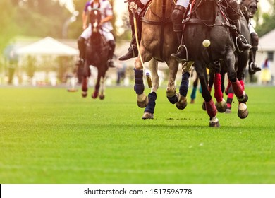 Polo horses run at the game. Big plan. Horses legs wrapped with bandages to protect against hammer kick. Ball took off in front of player