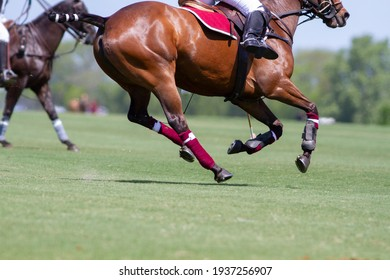 polo player and horse in Argentine countryside
