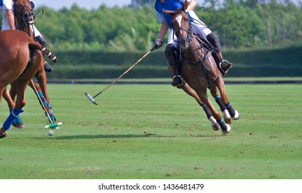 The Polo player ride a horse, battle in horse polo sport.