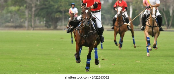 Polo players riding horses on the field,The polo pony running in match.