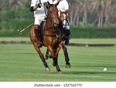 The polo players are riding on horseback to grab the polo ball in a fierce speed.