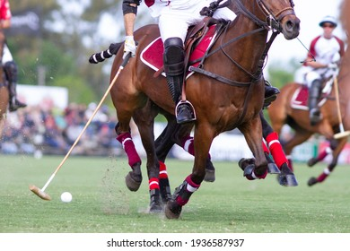 polo players and teams in a match