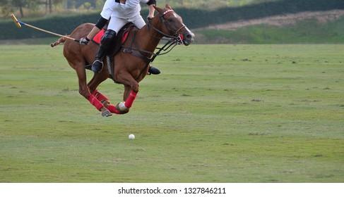 The Polo Pony Run In Macth.