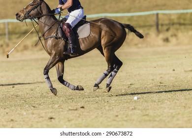Polo Rider Horse Action Polo equestrian rider horse pony game action