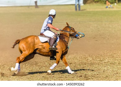 Polocrosse equestrian sport horse pony rider player closeup fast game action.