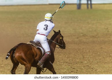 Polocrosse equestrian sport horse pony rider player passed ball from racket closeup fast game action.