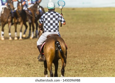 Polocrosse game rider umpire racket ball riding animal pony rear behind photo.