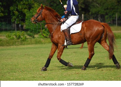 A polocrosse player riding on his horse on the field.