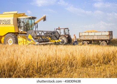 Polski Trumbesh - June 23: harvester reaps the harvest of wheat and full trailer attended farmer and storks against a blue sky with white clouds June 23, 2016, Polski Trambesh, Bulgaria