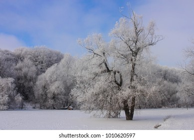 POLTAVA, UKRAINE - Snow-covered trees in the city dendropark during the winter season