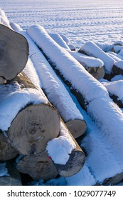 Polter, stacked felled tree trunks in winter. Cross section with markings, snow, bright sunshine in backlight for timber industry