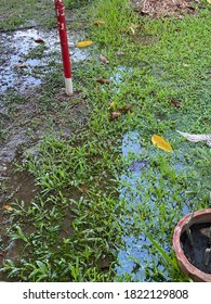 Poly vinyl water pipe leak detection on green grassy ground