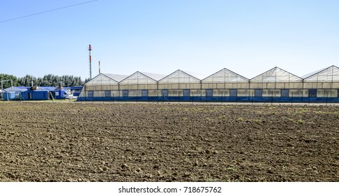 Polycarbonate greenhouses. Greenhouse complex. Greenhouses for growing vegetables under the closed ground.