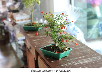 Bonsai Pomegranate High Res Stock Images Shutterstock