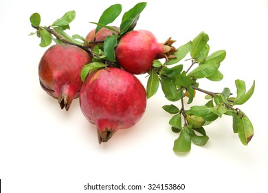 Pomegranate with branch