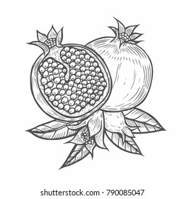 Pomegranate fruit, berry with flower and leafs. Hand drawn Engraved vintage retro sketch etch illustration. Organic nutrition healthy food. Isolated on white background