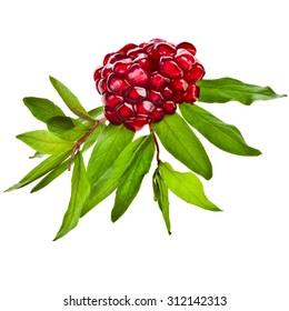 Pomegranate fruit close up isolated on white background