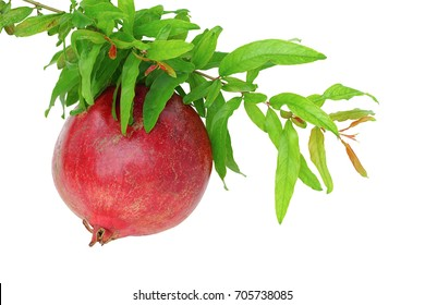 Pomegranate with leaves isolated on white background.This has clipping path.