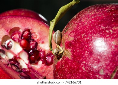 pomegranate with snail