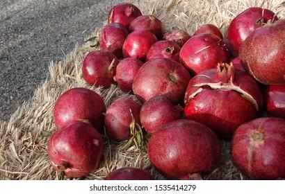 Pomegranates Close Up on Hay Bale