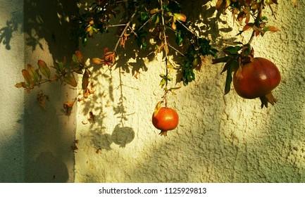 Pomegranates and their shadows