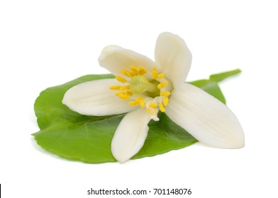 Pomelo flower isolated on white background