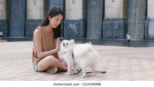 Pomeranian dog giving hand to pet owner