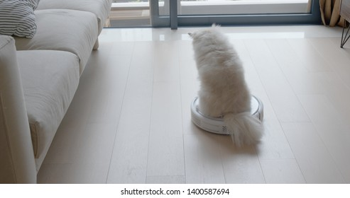 Pomeranian Dog sit on robotic vacuum cleaner slides across the room