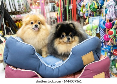 Pomeranian dog sitting on the bed in pet store
