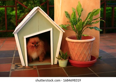 pomeranian dog in small green dog house