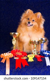 Pomeranian dog the winner of the exhibition