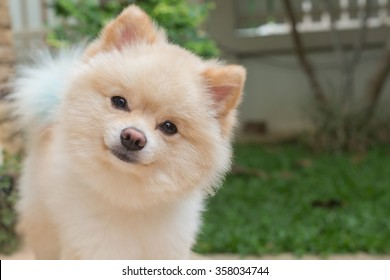 Fluffy Dog Images Stock Photos Vectors Shutterstock