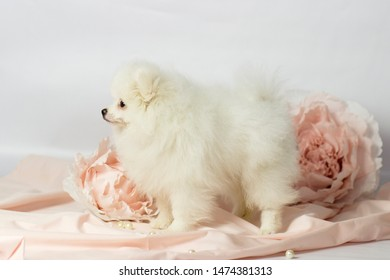 Cute Dog Puppy Images Stock Photos Vectors Shutterstock