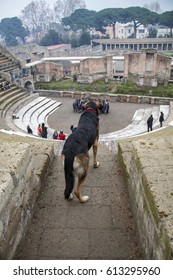Pompeii, Italy - 3 JANUARY 2012: Dog in Amphitheatre.  Pompeii in winter , Italy.  Pompeii is an ancient Roman city died from the eruption of Mount Vesuvius in the 1st century.