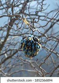 A pom-pom is made from threads of  blue, yellow and black wool. It is hanging from the bare branches of a tree.