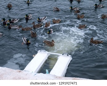 Pond aerator with ducks