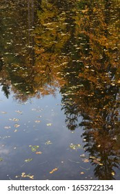 pond in autumn with leaves floating in it in autumn, reflection