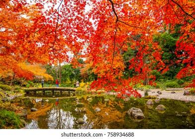 Pond and bridge at the Koishikawa-Korakuen Gardens in Autumn time with Red and orange leaves. Tokyo, Japan.