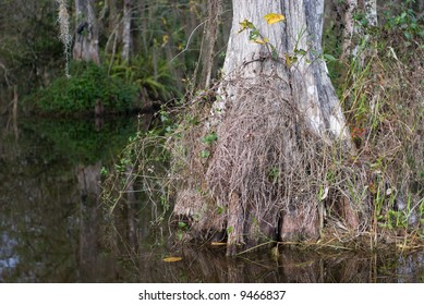 Pond with cypress trees in Florida Big Cypress Swamp.