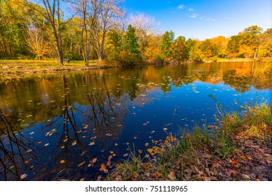 Pond in the Forest Preserve